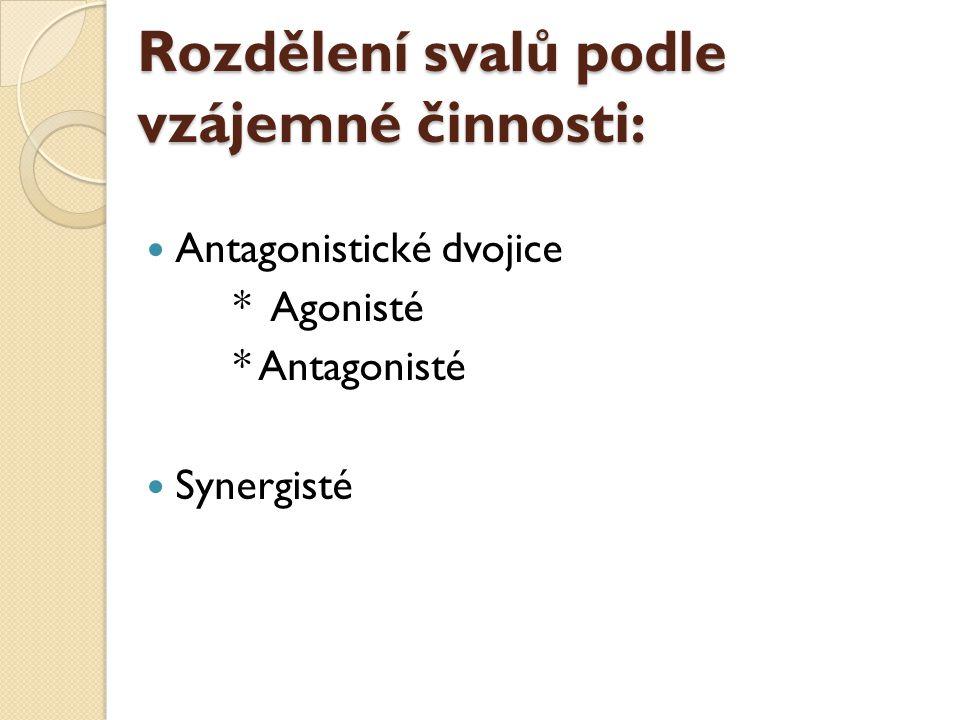 Antagonistické dvojice * Agonisté * Antagonisté Synergisté Rozdělení svalů podle vzájemné činnosti: