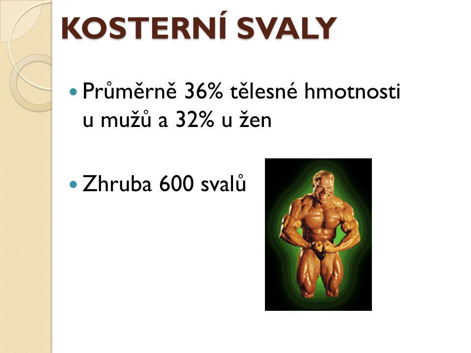 KOSTERNÍ SVALY Průměrně 36% tělesné hmotnosti u mužů a 32% u žen Zhruba 600 svalů