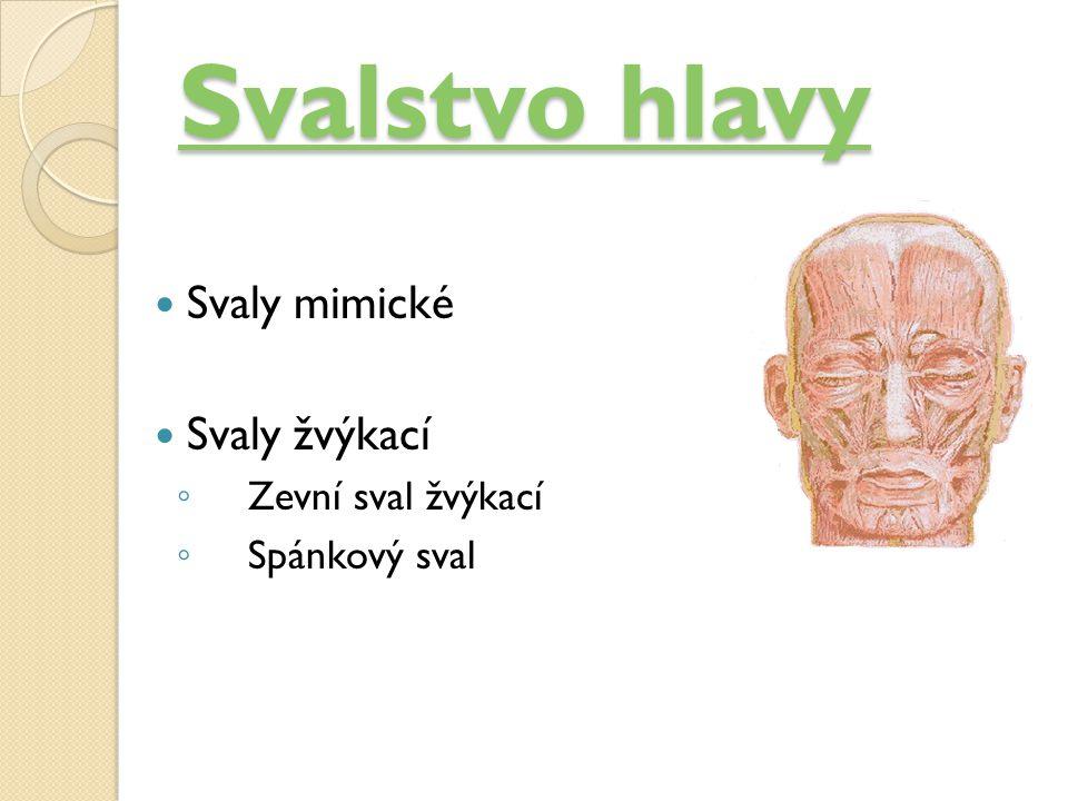 Svalstvo hlavy Svalstvo hlavy Svaly mimické Svaly žvýkací ◦ Zevní sval žvýkací ◦ Spánkový sval
