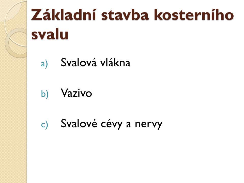Základní stavba kosterního svalu a) Svalová vlákna b) Vazivo c) Svalové cévy a nervy