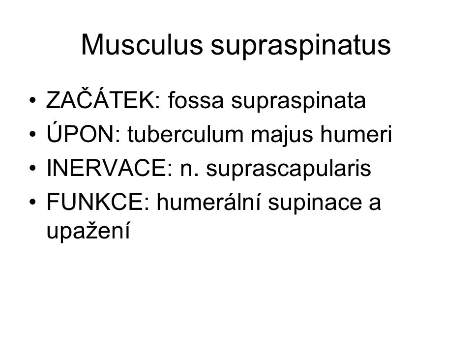Musculus infraspinatus ZAČÁTEK: fossa infraspinata ÚPON: tuberculum majus humeri INERVACE: n.