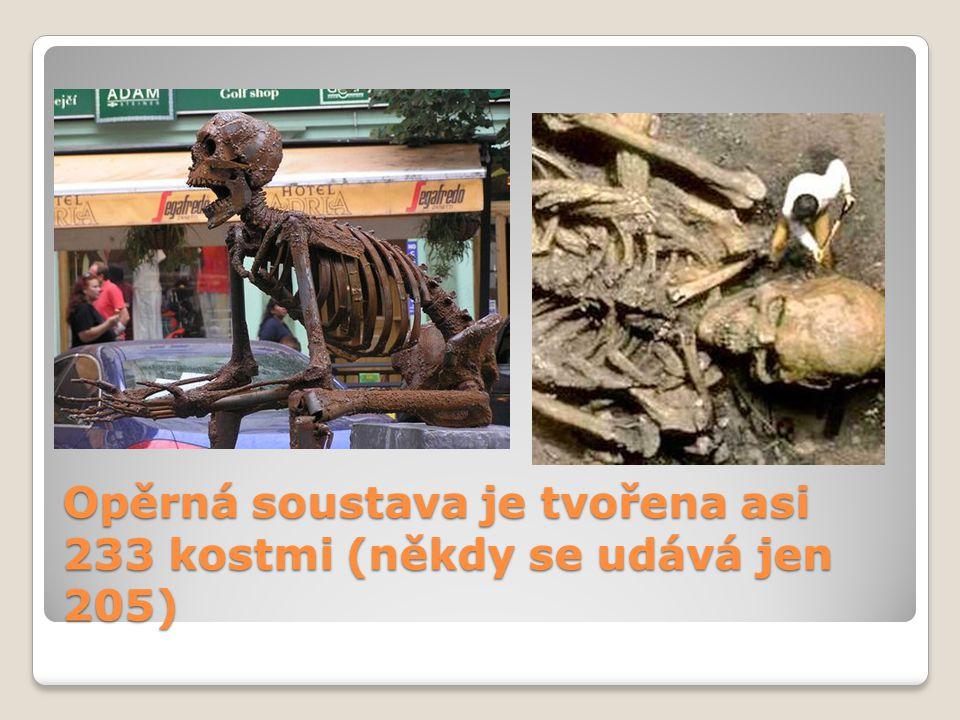 Opěrná soustava je tvořena asi 233 kostmi (někdy se udává jen 205)