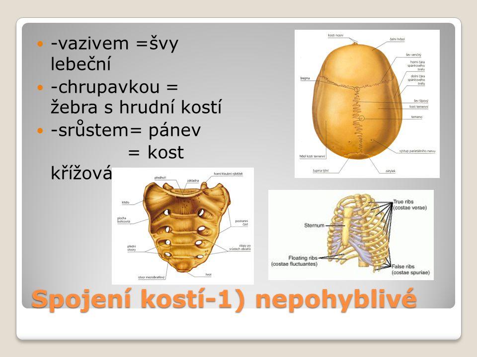 Spojení kostí-1) nepohyblivé -vazivem =švy lebeční -chrupavkou = žebra s hrudní kostí -srůstem= pánev = kost křížová