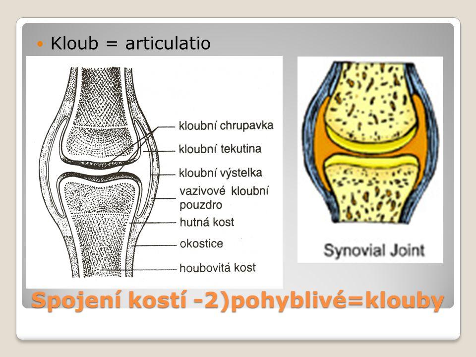 Spojení kostí -2)pohyblivé=klouby Kloub = articulatio