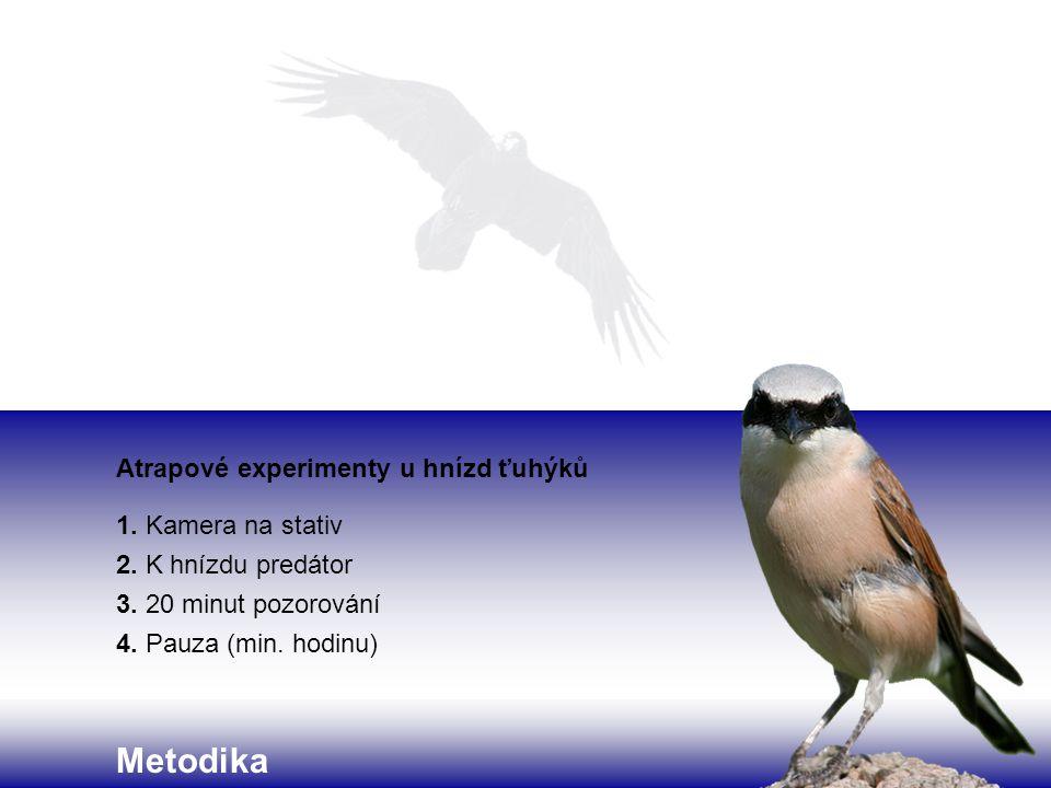 Metodika Atrapové experimenty u hnízd ťuhýků 1.Kamera na stativ 2.