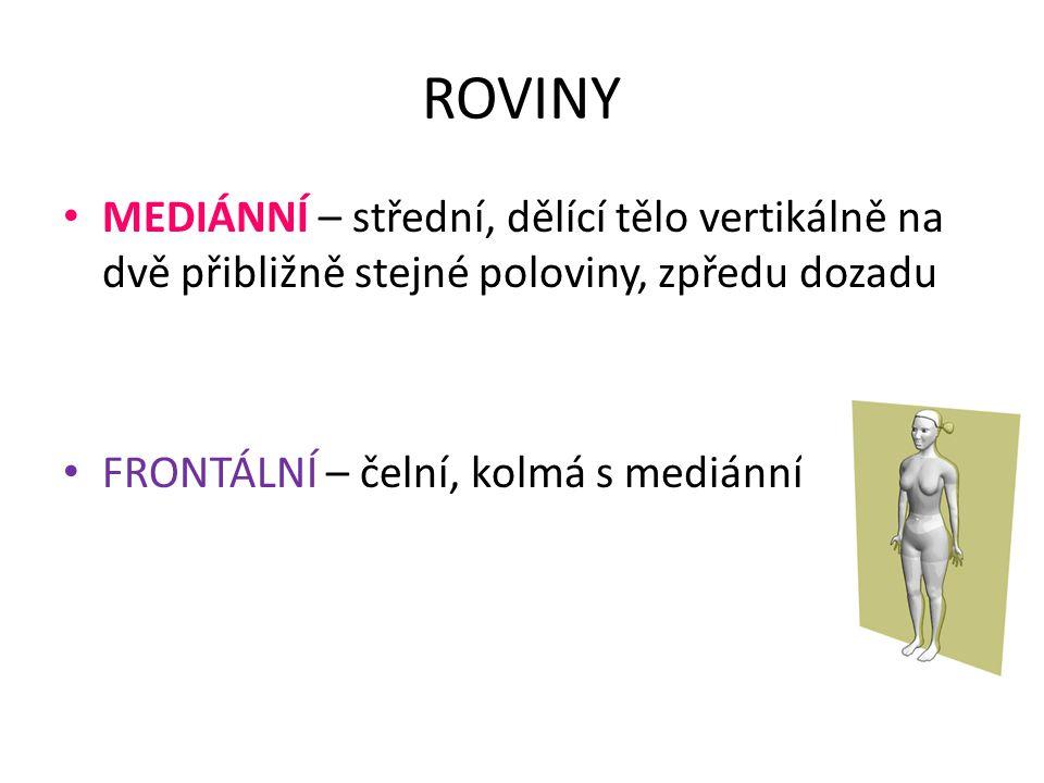 ROVINY MEDIÁNNÍ – střední, dělící tělo vertikálně na dvě přibližně stejné poloviny, zpředu dozadu FRONTÁLNÍ – čelní, kolmá s mediánní