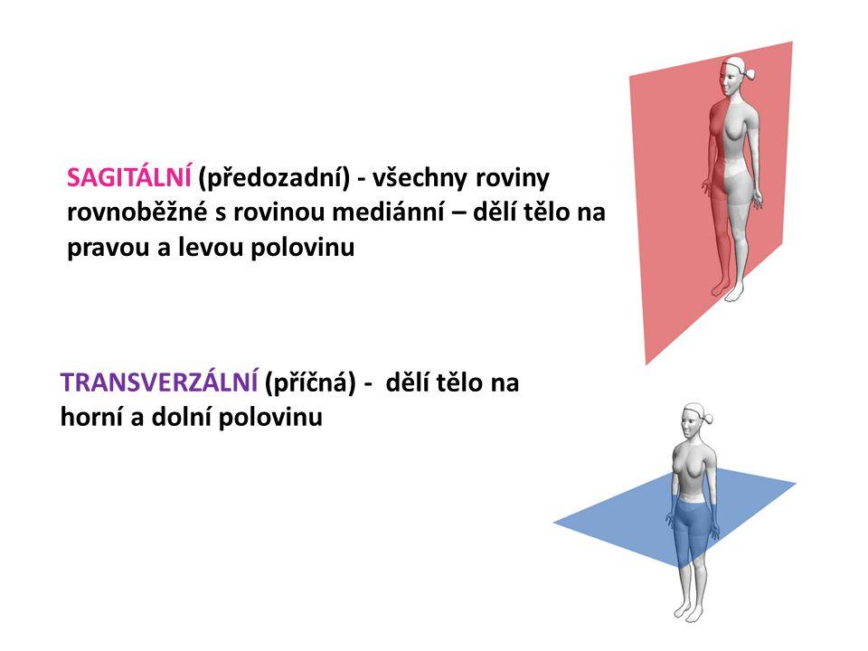 SAGITÁLNÍ (předozadní) - všechny roviny rovnoběžné s rovinou mediánní – dělí tělo na pravou a levou polovinu TRANSVERZÁLNÍ (příčná) - dělí tělo na horní a dolní polovinu