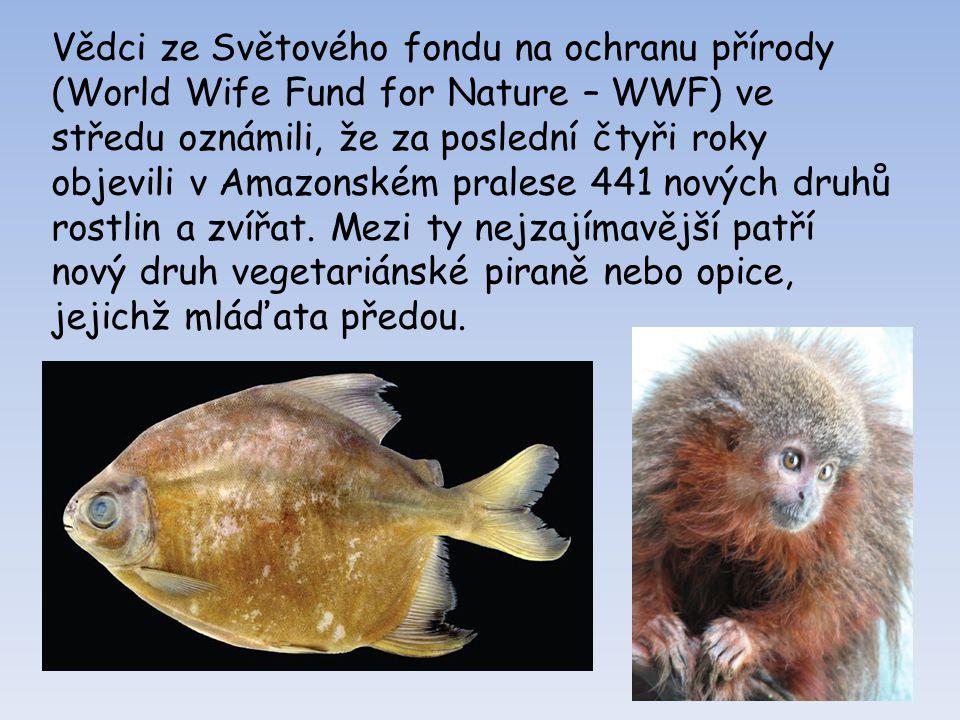Piraňa Piraňa je dravá ryba se spoustou malých zubů, která se běžně živí čerstvým masem.