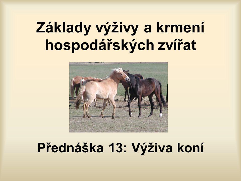 Základy výživy a krmení hospodářských zvířat Přednáška 13: Výživa koní