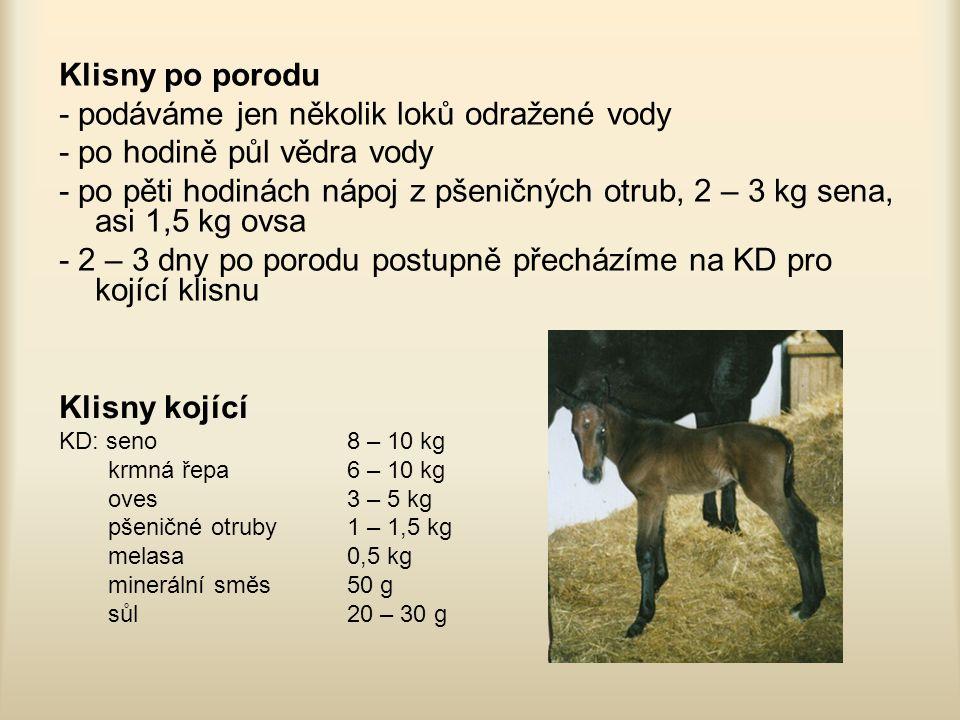 Klisny po porodu - podáváme jen několik loků odražené vody - po hodině půl vědra vody - po pěti hodinách nápoj z pšeničných otrub, 2 – 3 kg sena, asi