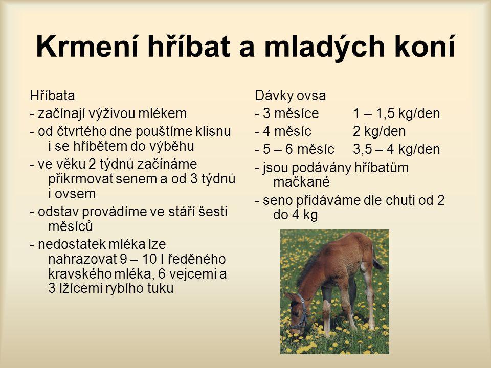 Krmení hříbat a mladých koní Hříbata - začínají výživou mlékem - od čtvrtého dne pouštíme klisnu i se hříbětem do výběhu - ve věku 2 týdnů začínáme př