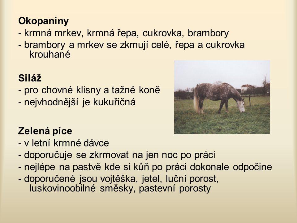 Krmení dostihových koní koní nepostradatelnými krmivy jsou oves, seno, mash a vmenší míře i krmná mrkev Období krmení: 1.