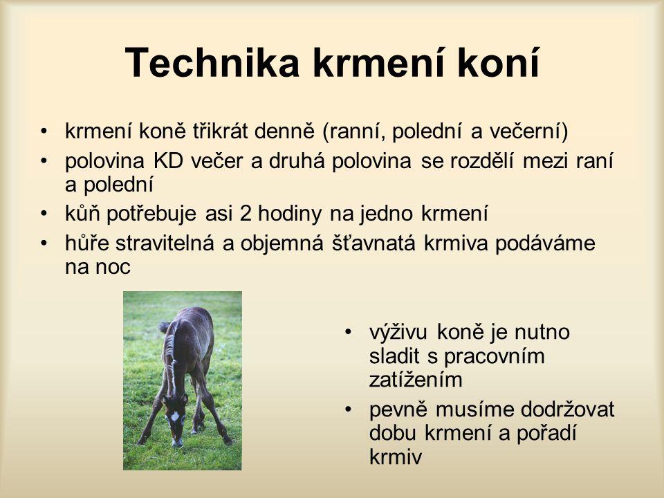 Technika krmení koní krmení koně třikrát denně (ranní, polední a večerní) polovina KD večer a druhá polovina se rozdělí mezi raní a polední kůň potřeb