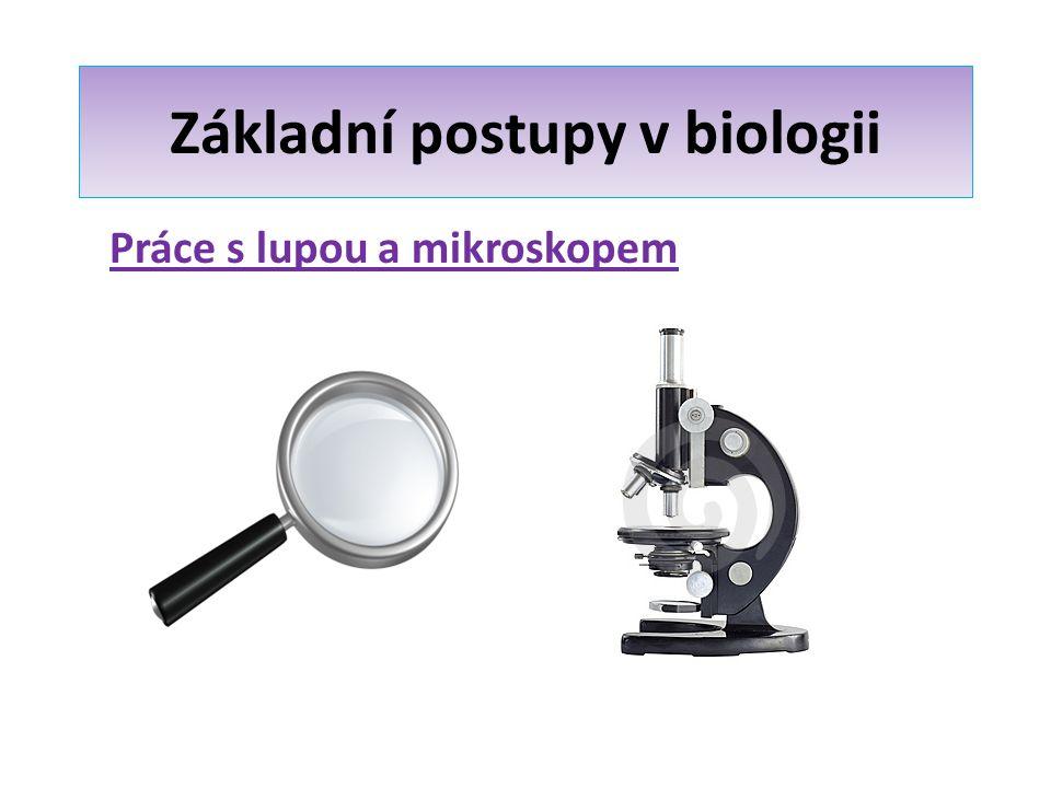 Základní postupy v biologii Naučíte se: Pracovat s lupou a mikroskopem Vést protokoly a pozorování dokumentovat nákresy s popisy Sledovat vnější a vnitřní stavbu rostlin a živočichů