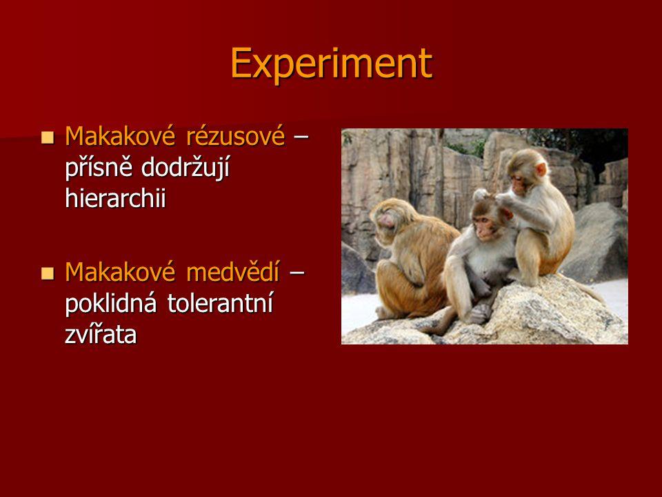 Experiment Makakové rézusové – přísně dodržují hierarchii Makakové rézusové – přísně dodržují hierarchii Makakové medvědí – poklidná tolerantní zvířat