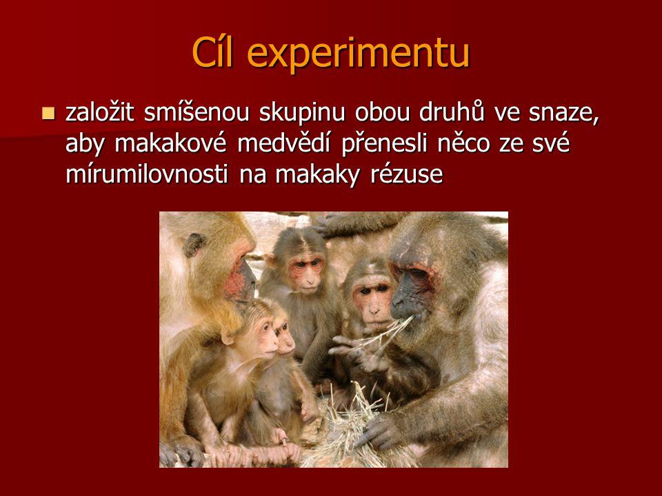 Cíl experimentu založit smíšenou skupinu obou druhů ve snaze, aby makakové medvědí přenesli něco ze své mírumilovnosti na makaky rézuse založit smíšen