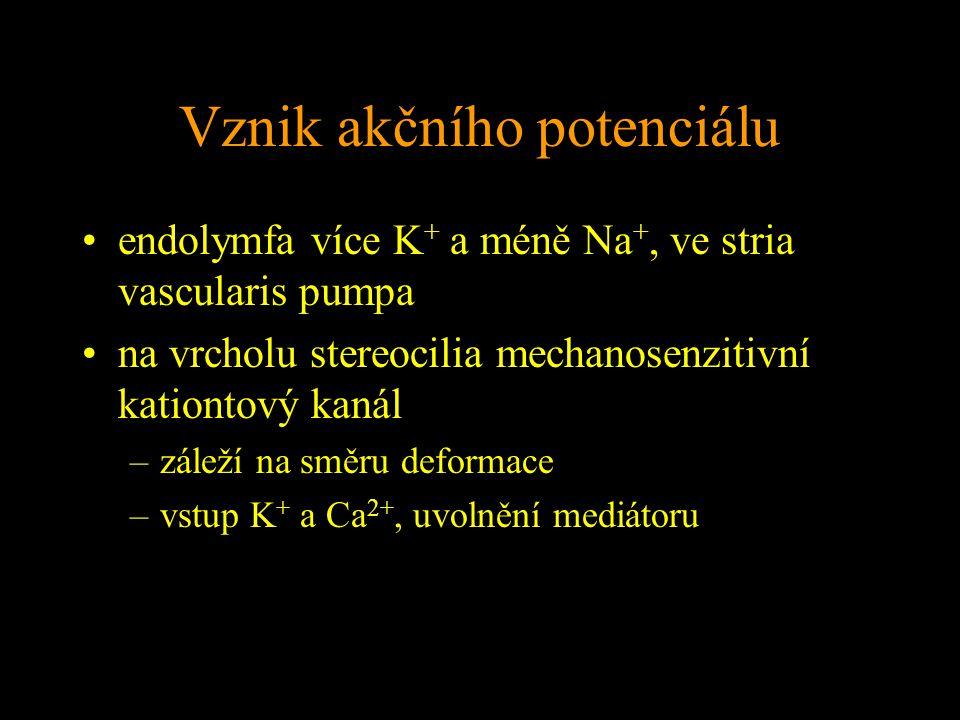 Vznik akčního potenciálu endolymfa více K + a méně Na +, ve stria vascularis pumpa na vrcholu stereocilia mechanosenzitivní kationtový kanál –záleží na směru deformace –vstup K + a Ca 2+, uvolnění mediátoru