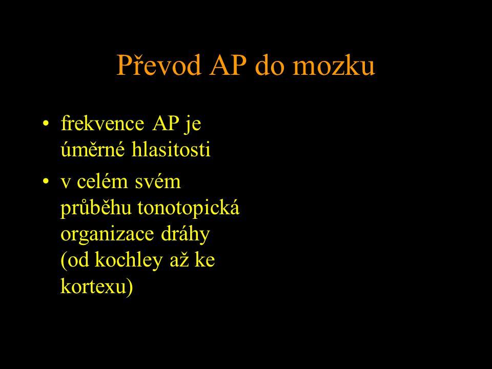 Převod AP do mozku frekvence AP je úměrné hlasitosti v celém svém průběhu tonotopická organizace dráhy (od kochley až ke kortexu)