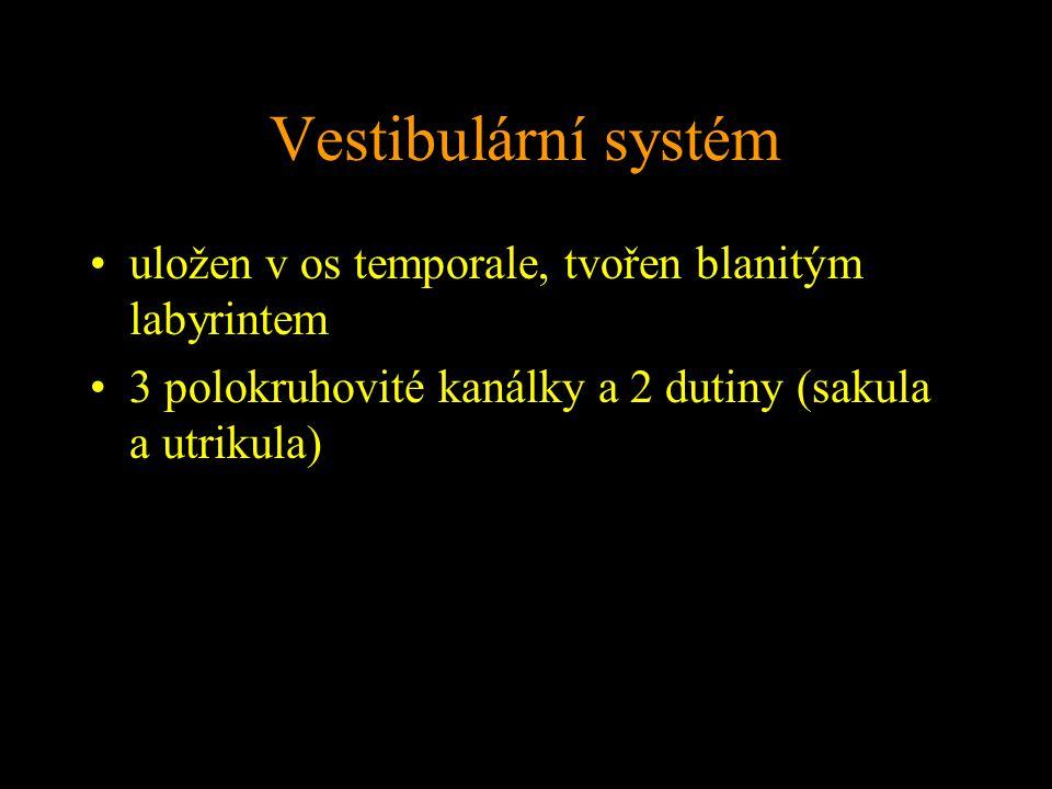 Vestibulární systém uložen v os temporale, tvořen blanitým labyrintem 3 polokruhovité kanálky a 2 dutiny (sakula a utrikula)