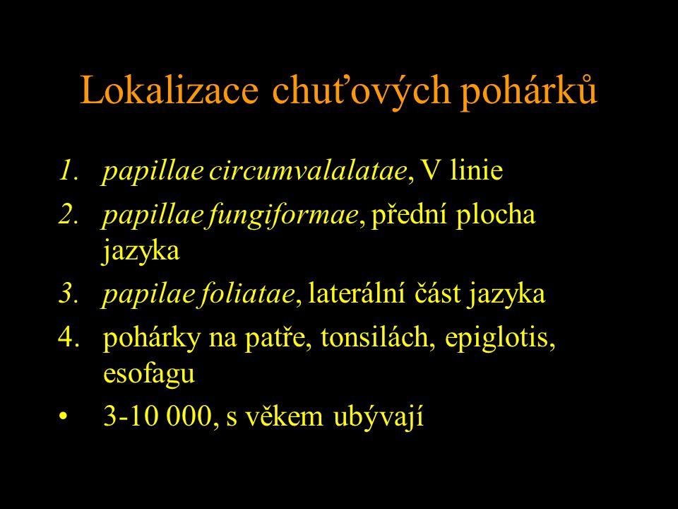 Lokalizace chuťových pohárků 1.papillae circumvalalatae, V linie 2.papillae fungiformae, přední plocha jazyka 3.papilae foliatae, laterální část jazyka 4.pohárky na patře, tonsilách, epiglotis, esofagu 3-10 000, s věkem ubývají