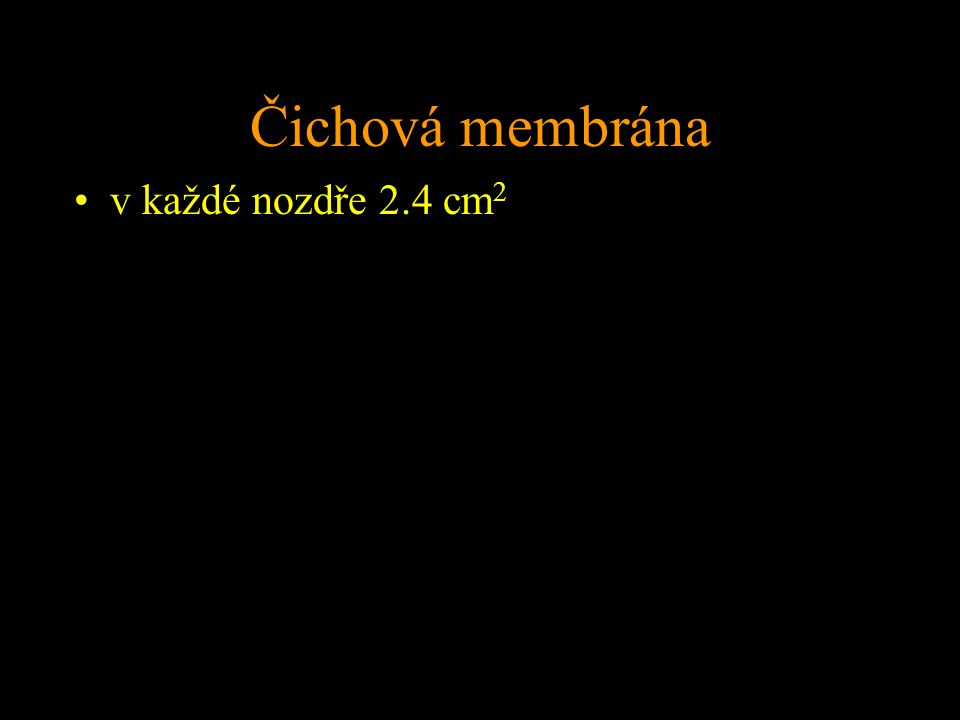 Čichová membrána v každé nozdře 2.4 cm 2