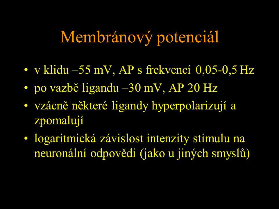 Membránový potenciál v klidu –55 mV, AP s frekvencí 0,05-0,5 Hz po vazbě ligandu –30 mV, AP 20 Hz vzácně některé ligandy hyperpolarizují a zpomalují logaritmická závislost intenzity stimulu na neuronální odpovědi (jako u jiných smyslů)