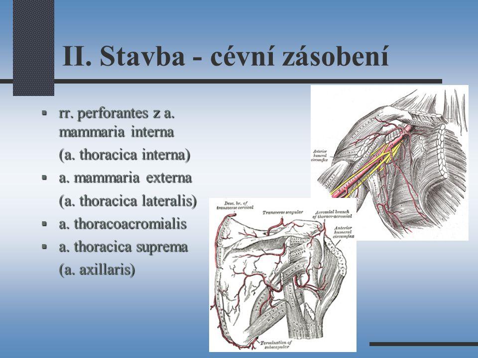II.Stavba - cévní zásobení  rr. perforantes z a.