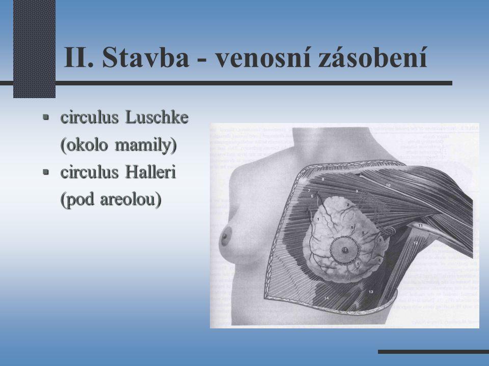 II. Stavba - venosní zásobení  circulus Luschke (okolo mamily)  circulus Halleri (pod areolou)