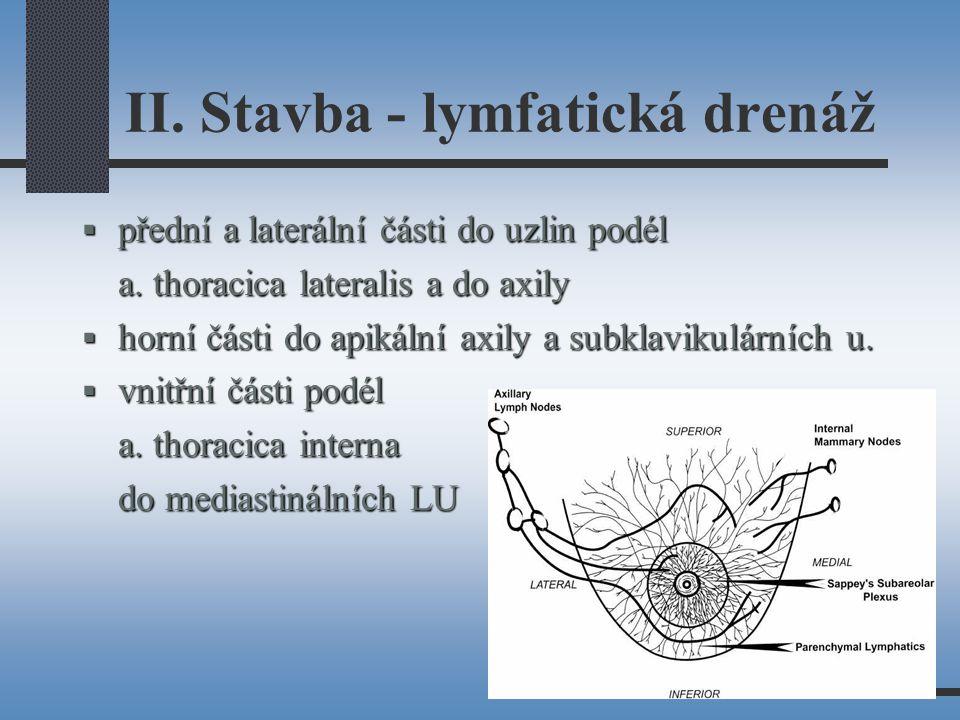 II.Stavba - lymfatická drenáž  přední a laterální části do uzlin podél a.