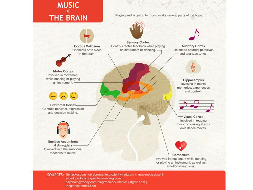 Mozek a zvuk hudby Akustické podněty ovlivňují chemickou aktivitu Změna frekvence dechu a srdeční aktivity – Pouze u lidí a zpěvných ptáků Provázanost s centrem řeči – poškození centra řeči x schopnost vnímat hudbu – komunikují skrz hudbu Poslech hudby zaměstnává obě hemisféry – Konzervatoristé a lidé, kteří studují hudbu lépe řeší problémy Příjemná hudba – serotonin – Libé pocity x deprese, přirozená činnost střev x sy dráždivého střeva