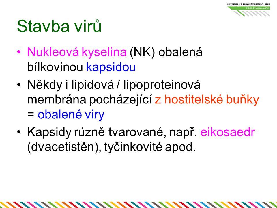 Stavba virů Nukleová kyselina (NK) obalená bílkovinou kapsidou Někdy i lipidová / lipoproteinová membrána pocházející z hostitelské buňky = obalené viry Kapsidy různě tvarované, např.