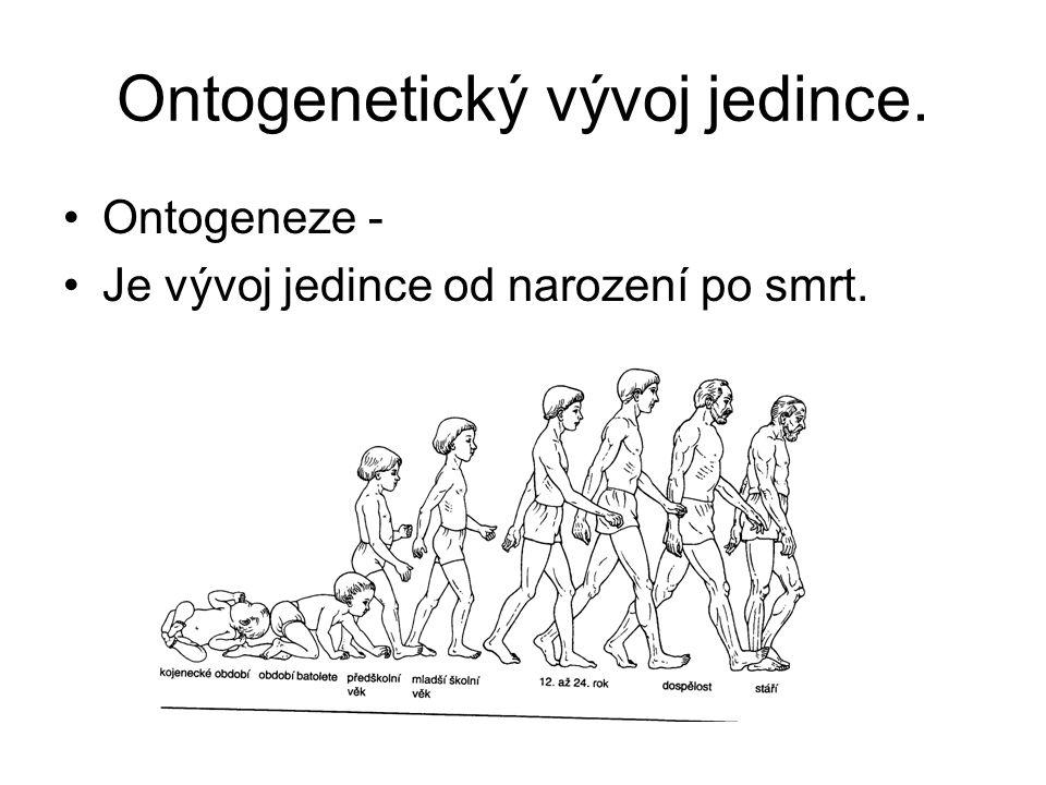 Ontogenetický vývoj jedince. Ontogeneze - Je vývoj jedince od narození po smrt.