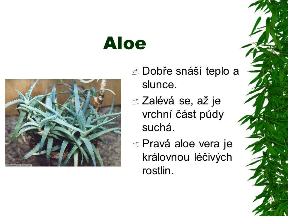Aloe  Dobře snáší teplo a slunce.  Zalévá se, až je vrchní část půdy suchá.