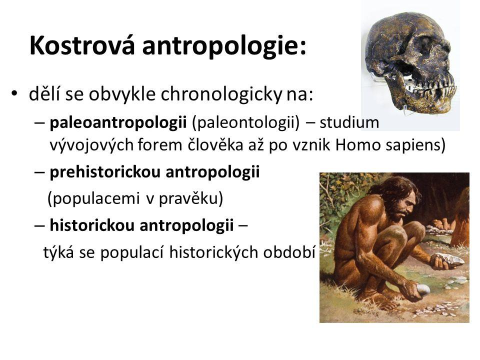 Kostrová antropologie: dělí se obvykle chronologicky na: – paleoantropologii (paleontologii) – studium vývojových forem člověka až po vznik Homo sapie