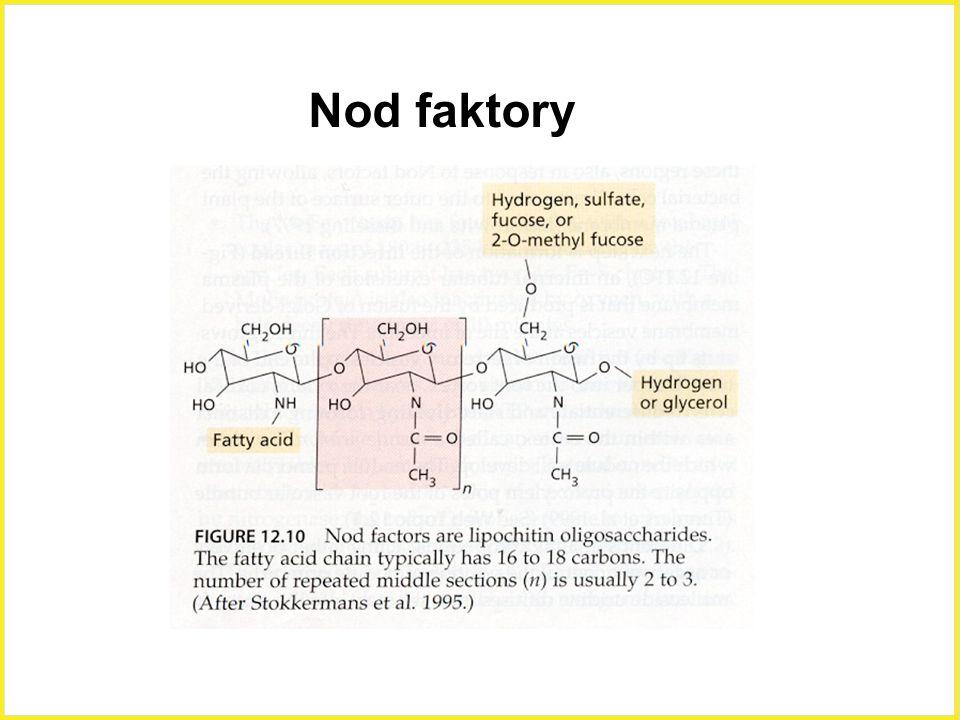 Nod faktory