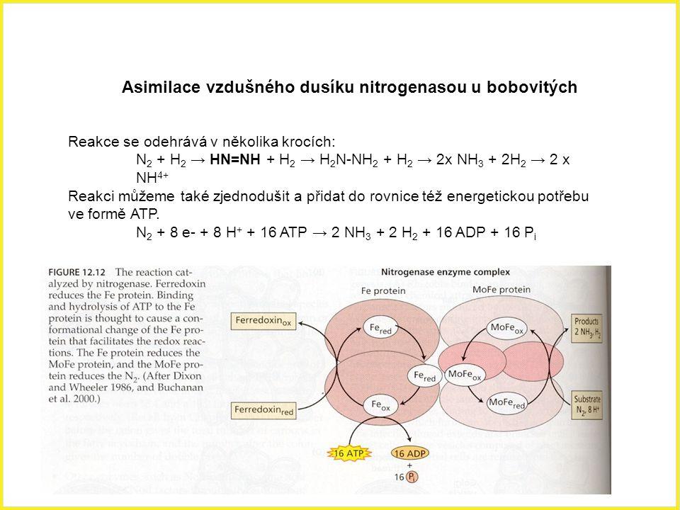 Asimilace vzdušného dusíku nitrogenasou u bobovitých Reakce se odehrává v několika krocích: N 2 + H 2 → HN=NH + H 2 → H 2 N-NH 2 + H 2 → 2x NH 3 + 2H