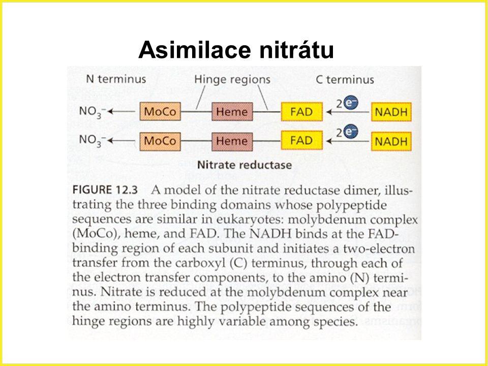 Asimilace nitrátu