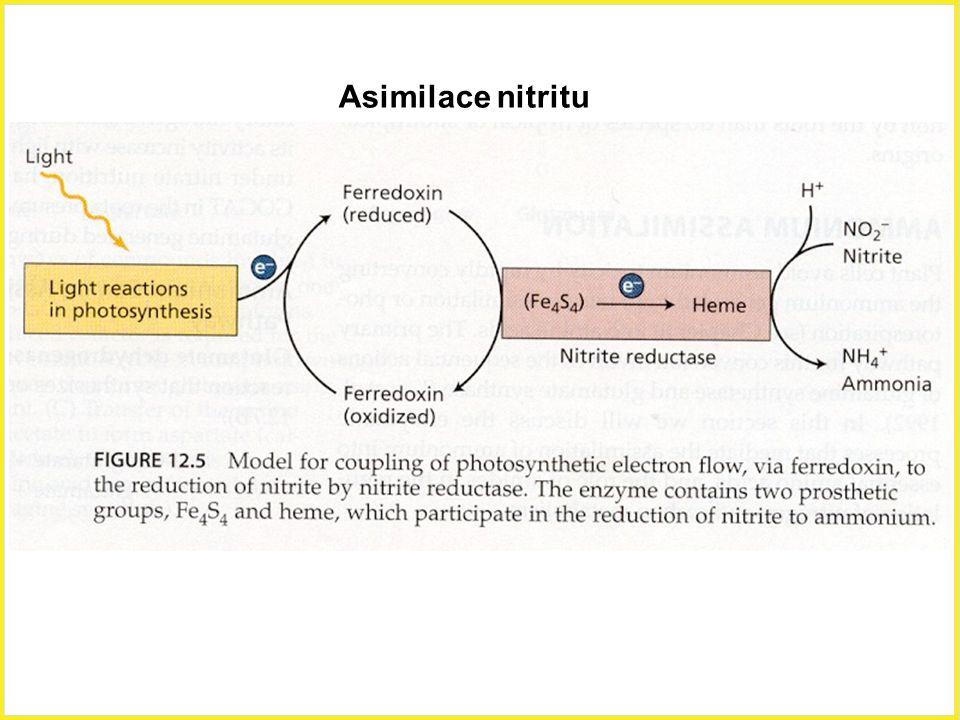 Asimilace nitritu