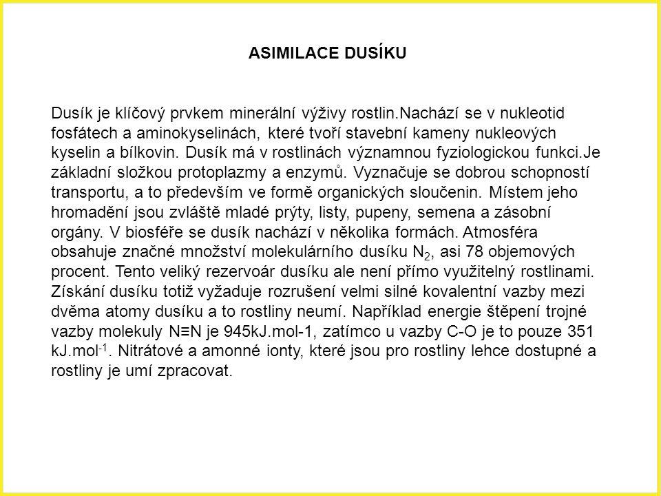 ASIMILACE DUSÍKU Dusík je klíčový prvkem minerální výživy rostlin.Nachází se v nukleotid fosfátech a aminokyselinách, které tvoří stavební kameny nukl