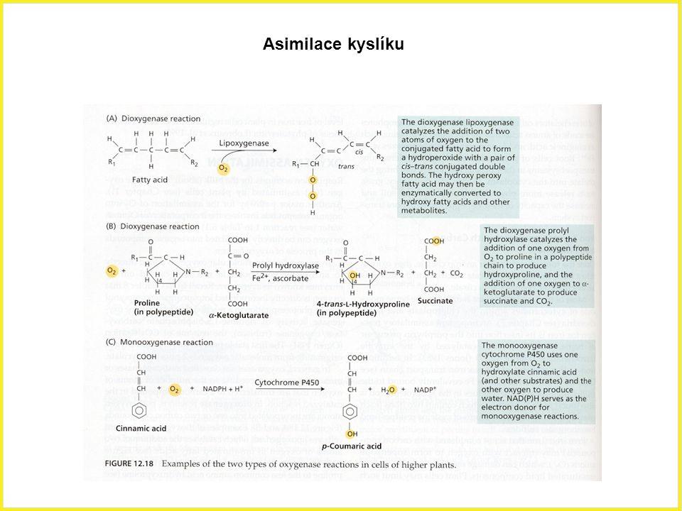 Asimilace kyslíku