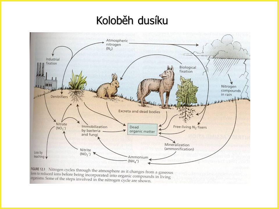 Zdroje dusíku na Zemi