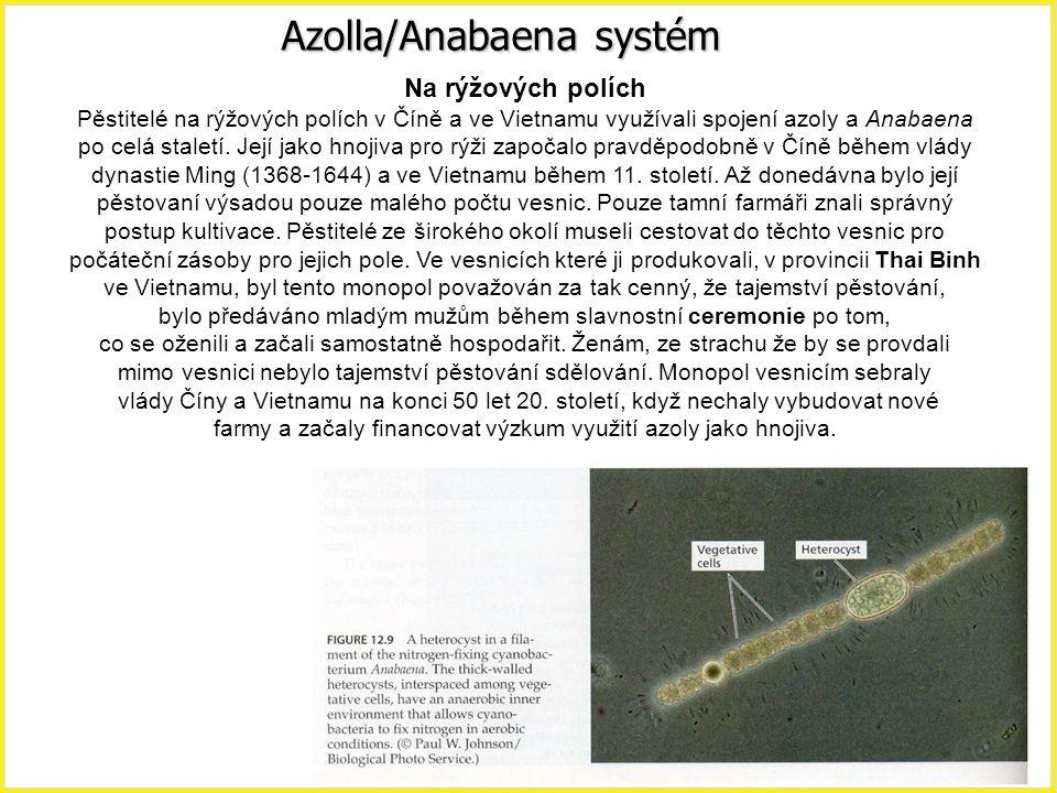 Azolla/Anabaena systém Na rýžových polích Pěstitelé na rýžových polích v Číně a ve Vietnamu využívali spojení azoly a Anabaena po celá staletí. Její j