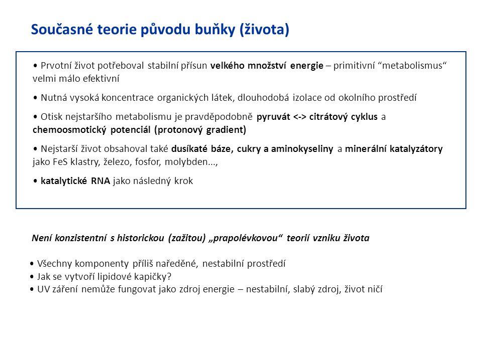 """Současné teorie původu buňky (života) Prvotní život potřeboval stabilní přísun velkého množství energie – primitivní """"metabolismus"""" velmi málo efektiv"""