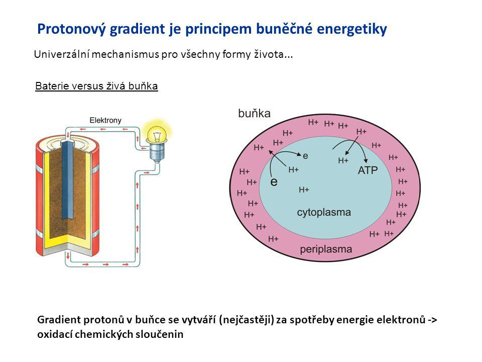 Protonový gradient je principem buněčné energetiky Univerzální mechanismus pro všechny formy života... Baterie versus živá buňka Gradient protonů v bu