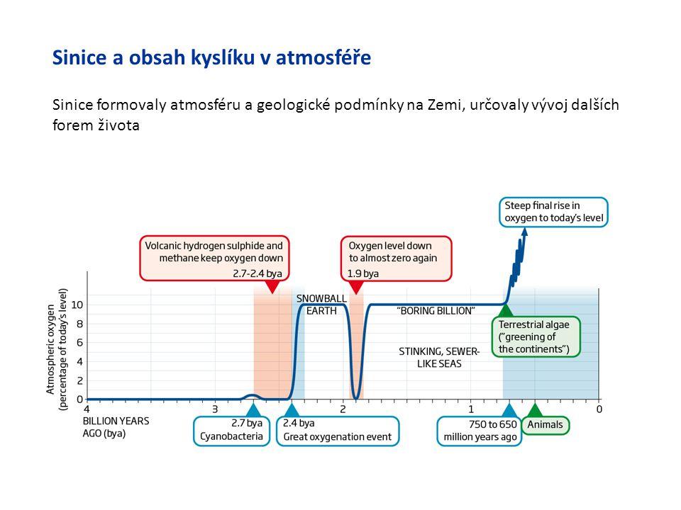 Sinice a obsah kyslíku v atmosféře Sinice formovaly atmosféru a geologické podmínky na Zemi, určovaly vývoj dalších forem života