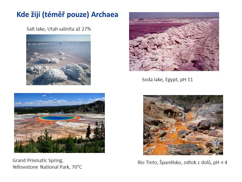 Soda lake, Egypt, pH 11 Salt lake, Utah salinita až 27% Kde žijí (téměř pouze) Archaea Rio Tinto, Španělsko, odtok z dolů, pH < 4 Grand Prismatic Spri