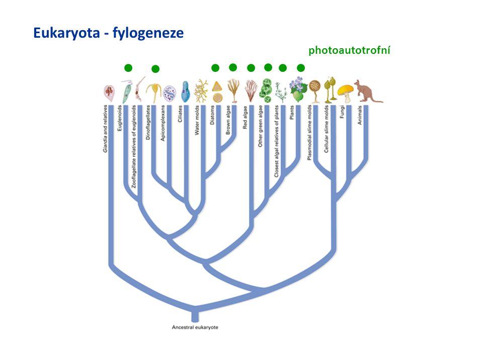 Eukaryota - fylogeneze photoautotrofní