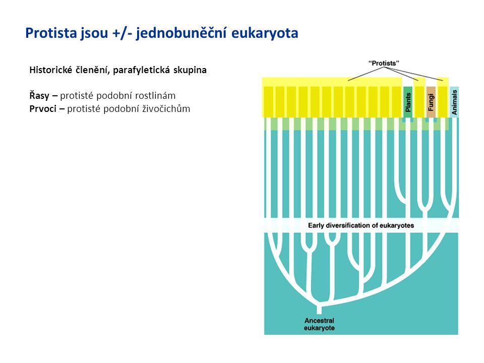 Historické členění, parafyletická skupina Řasy – protisté podobní rostlinám Prvoci – protisté podobní živočichům Protista jsou +/- jednobuněční eukary