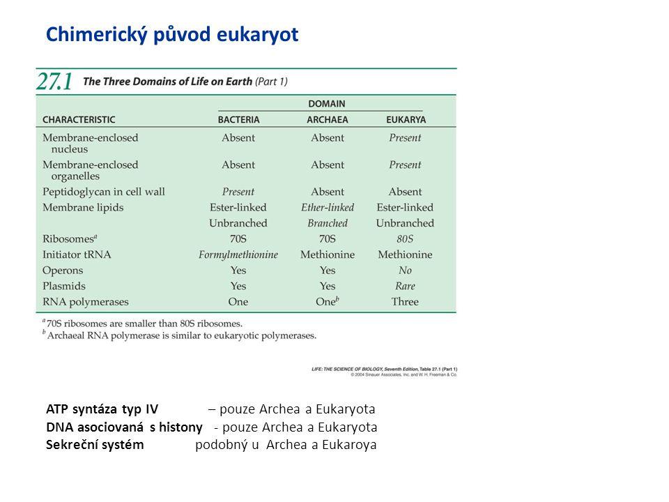 ATP syntáza typ IV – pouze Archea a Eukaryota DNA asociovaná s histony - pouze Archea a Eukaryota Sekreční systém podobný u Archea a Eukaroya Chimeric