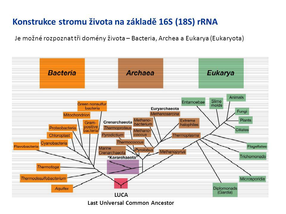 Konstrukce stromu života na základě 16S (18S) rRNA LUCA Last Universal Common Ancestor Je možné rozpoznat tři domény života – Bacteria, Archea a Eukar
